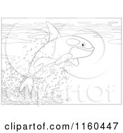 Cartoon Of An Outlined Cute Orca Whale Leaping Out Of Water Royalty Free Vector Clipart