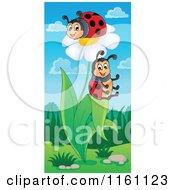Cartoon Of Ladybugs On A White Daisy Plant Royalty Free Vector Clipart