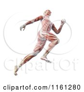 Clipart Of The 3d Muscle Anatomy Of A Runner Royalty Free CGI Illustration