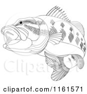 Black And White Bass Fish