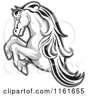 Clipart Of A Black And White Rearing Horse Outlined In Gray Royalty Free Vector Illustration