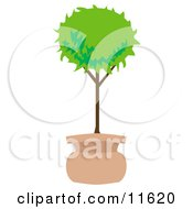 Potted Tree In The Shape Of A Ball Clipart Illustration