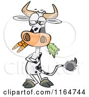 Cartoon Of A Cow With Folded Arms Munching On Carrots Royalty Free Vector Clipart by toonaday