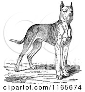 Clipart Of A Retro Vintage Black And White Great Dane Dog Royalty Free Vector Illustration