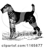 Clipart Of A Retro Vintage Black And White Airedale Terrier Dog Royalty Free Vector Illustration by Prawny Vintage