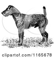 Clipart Of A Retro Vintage Black And White Irish Terrier Dog Royalty Free Vector Illustration by Prawny Vintage