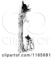 Clipart Of A Retro Vintage Black And White Dog With A Cat Up A Tree Royalty Free Vector Illustration