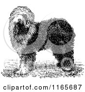 Clipart Of A Retro Vintage Black And White Old English Sheepdog Royalty Free Vector Illustration