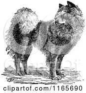 Clipart Of A Retro Vintage Black And White Chow Chow Dog Royalty Free Vector Illustration