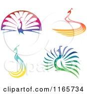 Colorful Peacocks