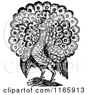 Clipart Of A Retro Vintage Black And White Peacock Bird 2 Royalty Free Vector Illustration by Prawny Vintage