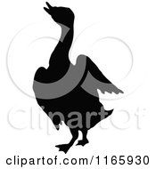 Silhouetted Duck