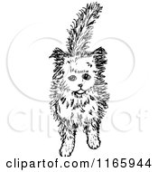 Clipart Of A Retro Vintage Black And White Kitten 3 Royalty Free Vector Illustration by Prawny Vintage