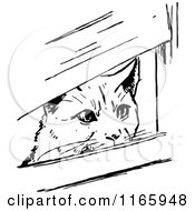 Clipart Of A Retro Vintage Black And White Cat Peeking Through Boards Royalty Free Vector Illustration