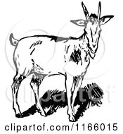 Clipart Of A Retro Vintage Black And White Goat Royalty Free Vector Illustration
