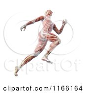 Clipart Of A Runners Body With Visible Muscles On White Royalty Free CGI Illustration