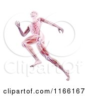 Clipart Of A Runners Body With Visible Muscles And Bones Over White Royalty Free CGI Illustration