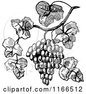 Clipart Of A Retro Vintage Black And White Bunch Of Grapes On The Vine Royalty Free Vector Illustration