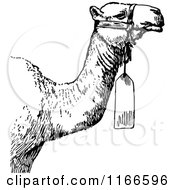 Clipart Of A Retro Vintage Black And White Camel With A Tag Royalty Free Vector Illustration by Prawny Vintage