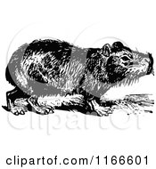Clipart Of A Retro Vintage Black And White Capybara Royalty Free Vector Illustration by Prawny Vintage