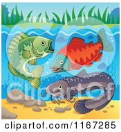 Cartoon Of River Fish Underwater Royalty Free Vector Clipart