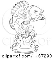 Cartoon Of An Outlined Leaping Bass Fish Royalty Free Vector Clipart
