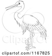 Cartoon Of A Standing Outlined Heron Or Egret Royalty Free Vector Clipart