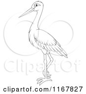 Cartoon Of A Standing Outlined Stork Royalty Free Vector Clipart