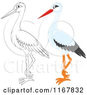 Cartoon Of A Standing Outlined And White Stork Royalty Free Vector Clipart