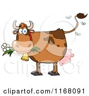 Stinky Brown Cow With Flies