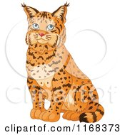 Cartoon Of A Cute Sitting Bobcat Royalty Free Vector Clipart by Pushkin