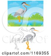 Cartoon Of A Wading Gray Heron With Color And Outlined Poses Royalty Free Clipart