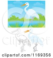 Cartoon Of A Wading White Heron Or Egret With Color And Outlined Poses Royalty Free Clipart