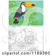 Cartoon Of An Outlined And Colored Toucan Bird Perched In A Tree Royalty Free Vector Clipart by Alex Bannykh