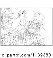 Cartoon Of An Outlined Toucan Bird Perched In A Tree Royalty Free Vector Clipart by Alex Bannykh