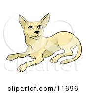 Beige Cat Clipart Illustration