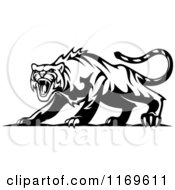 Clipart Of A Black And White Roaring Aggressive Tiger Royalty Free Vector Illustration