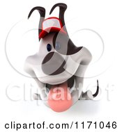 Clipart Of A 3d Jack Russell Terrier Dog Wearing A Hat Over A Sign Royalty Free CGI Illustration