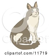 Brown And Tan Cat Clipart Illustration