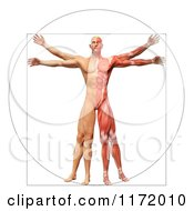 Clipart Of A 3d Vitruvian Man With Exposed Muscles On One Side And Skin On The Other Royalty Free CGI Illustration