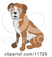 Cute Boxer Dog Sitting by AtStockIllustration