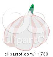 Garlic Bulb Clipart Illustration by AtStockIllustration