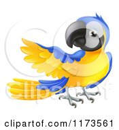 Cartoon Of A Blue And Yellow Parrot Presenting Royalty Free Vector Clipart