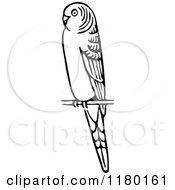 Clipart Of A Black And White Budgie Bird Royalty Free Vector Illustration by Prawny Vintage