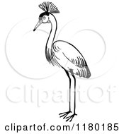 Clipart Of A Black And White Crested Crane Bird Royalty Free Vector Illustration