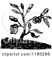 Clipart Of A Retro Vintage Black And White Flowering Plant Royalty Free Vector Illustration
