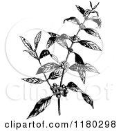 Retro Vintage Black And White Coffee Plant