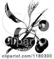 Retro Vintage Black And White Cherry Branch