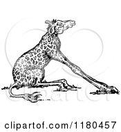 Clipart Of A Retro Vintage Black And White Short Neck Giraffe Royalty Free Vector Illustration by Prawny Vintage
