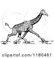 Clipart Of A Retro Vintage Black And White Giraffe Walking Royalty Free Vector Illustration by Prawny Vintage